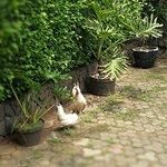 Cute chickens around the Spa