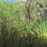 Photo de Everglades Adventure Tours