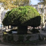 Fontaine Moussue