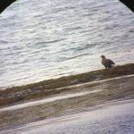 Island Encounters Image