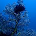 Photo of DSM Dive Gili Diving Center