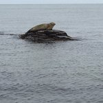 seal on a rock out at sea!