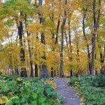 Arboretum Japanese Gardens