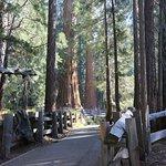 Along the General Sherman Tree Trail