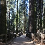 Gen Sherman Tree Trail