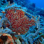 Photo of Lembongan Dive Center