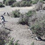Photo of Estancia San Lorenzo, Pinguins Land