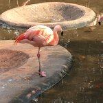 Pretty in pink. Flamingoes were so peaceful