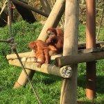 Orange orangutans