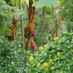 Beautiful palm inflorescence.