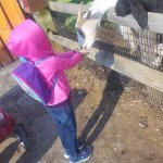 feeding the goats. we got there early and they were eager to eat!