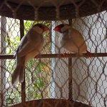 La Mare aux Oiseaux