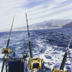 Genuine Fishing in Tenerife Foto