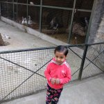Small Zoo.