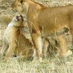 Big 7 Kitheka Safaris Day Tours Photo