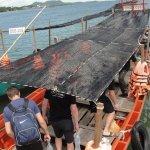Boat Transfer to Island