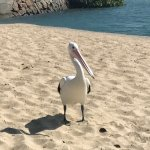 Photo of Maroochydore Beach