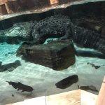 صورة فوتوغرافية لـ Newport Aquarium