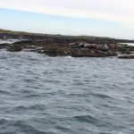 Plenty of seals
