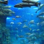 Photo de Aquarium Donostia-San Sebastian