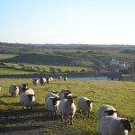Sheep near the hotel