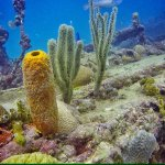Beautiful sponges and corals.