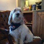 Frankie the pub dog