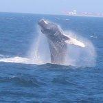Hyannis Whale Watcher Cruises Photo