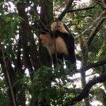 Photo of Hotel Jardines de Monteverde