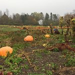 Dill's Atlantic Giant Pumpkin Farm