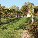 Area Vineyards