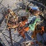 Crab basket was full