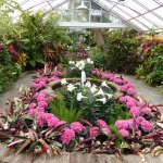 Bellingrath greenhouse