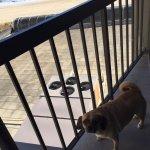 Roxy loves the balcony
