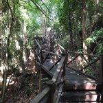 Jungle trekking with friends