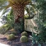 Photo of Yucca Alacati