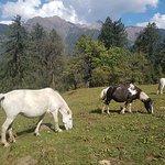 Wild horses seen on Trek from Poonam mountain lodge
