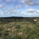 Uitzichtpunt in Nationaal Park Zuid-Kennemerland (Sigrid vd Ploeg)