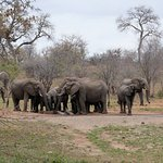 View of elephants at watering hole in front of hotel