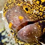 Photo of World Diving Lembongan
