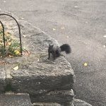Canadian squirrels!