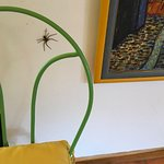 Spider in room