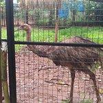 Foto de Bosque Guarani zoo