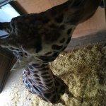 Φωτογραφία: Noah's Ark Zoo Farm