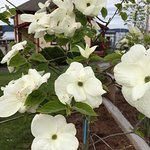 Flowers along the way,Osborne Bay Pub 1534 Joan Avenue, Crofton, British Columbia
