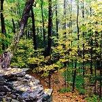 sherri's forest