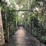 Borneo Rainforest Lodge Foto