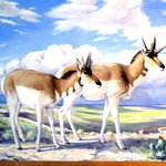 Pronghorn Picture, Panhandle-Plains Historical Museum, Canyon, Texas
