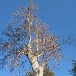 Einer der Bäume in diesem Park