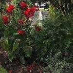 Wonderful array of plants